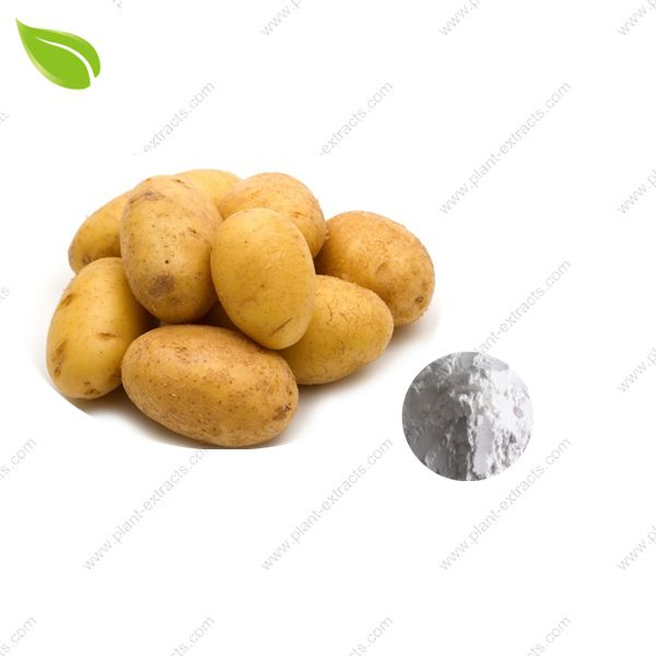 Dried Potato Powder